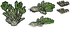 fennel.png.bb4eb476527585e54cee4a5a555a499f.png