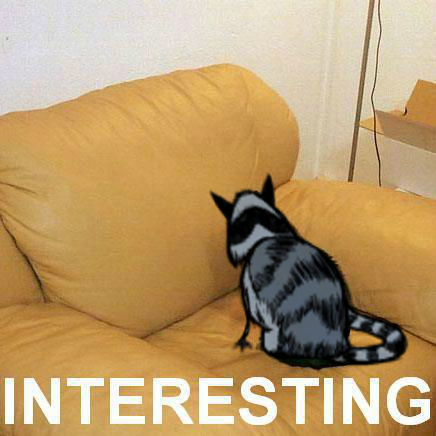 interesting_catcoon.png